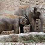 Elefanten im Zoologischen Garten Berlin