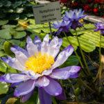 Der Botanische Garten in Linz