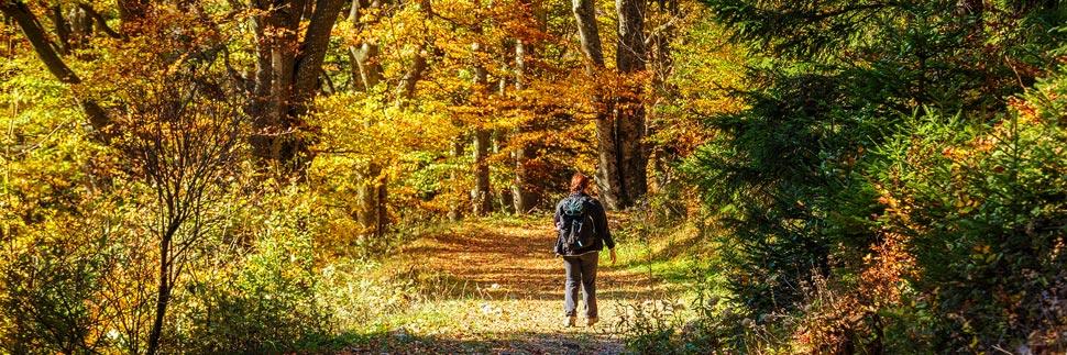 Wanderweg auf dem Muckenkogel in Herbstfarben
