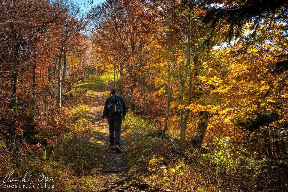 Herbstlicher Wanderweg zur Traisner Hütte auf dem Muckenkogel (Lilienfeld)