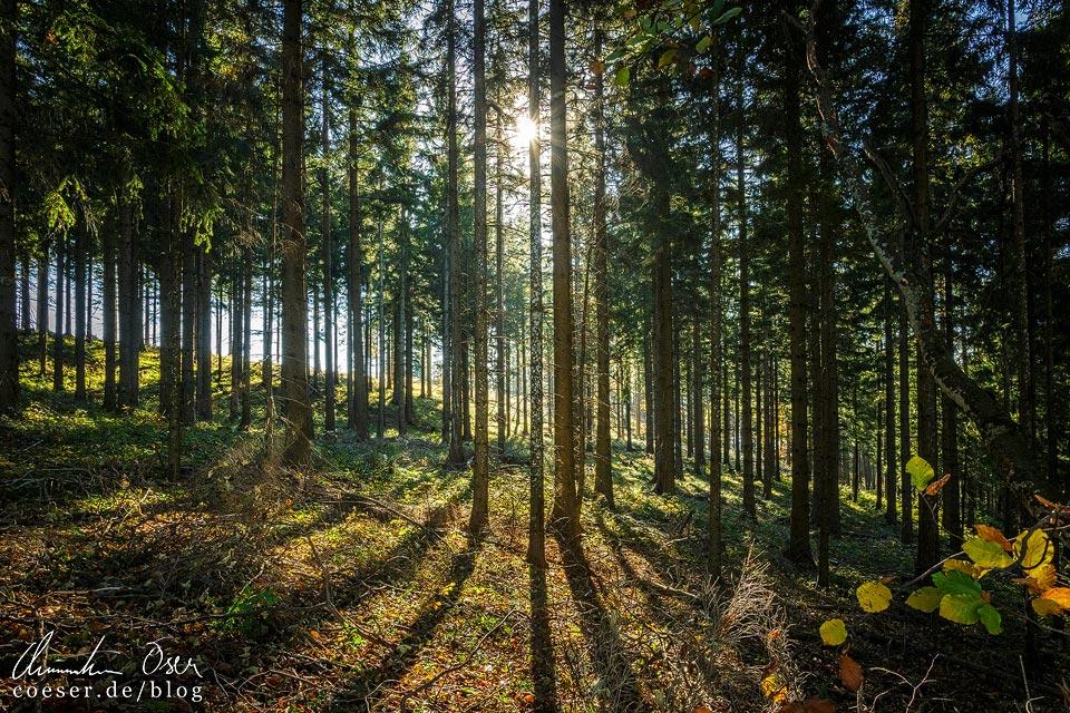 Sonne scheint durch Bäume in einem Wald auf dem Muckenkogel (Lilienfeld)