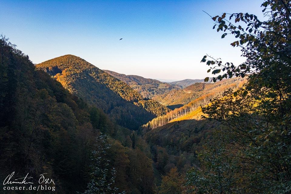 Wanderung auf dem Muckenkogel (Lilienfeld)