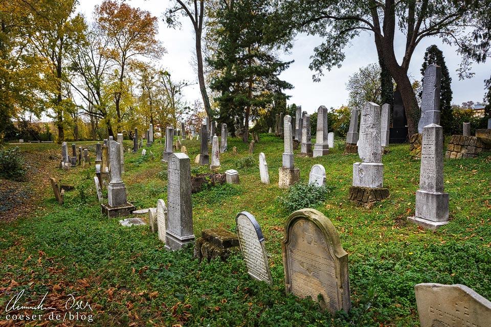 Grabsteine auf dem jüdischen Friedhof in Břeclav (Lundenburg)