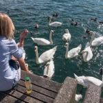 Eine Frau füttert Schwäne und Enten am Zürisee in Zürich