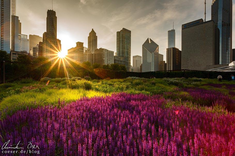 Sonnenuntergang und Skyline von Chicago
