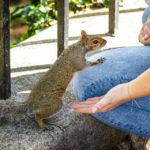 Ein freches Eichhörnchen im Brandon Hill Park in Bristol