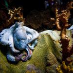 Fischbecken im Aquarium Barcelona