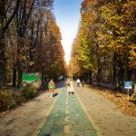 Herbststimmung im König-Michael-I.-von-Rumänien-Park (Herăstrău-Park)