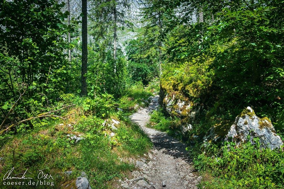 Wanderweg zur Fischunkelalm am Königssee