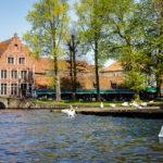 Schwäne im Wasser auf dem Platz Wijngaardplein nahe des Minnewaterparks in Brügge