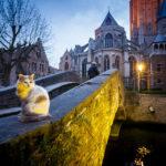 Nachtaufnahme einer Katze auf der Bonifaciusbrücke in Brügge