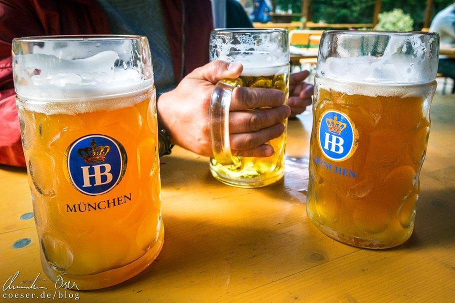Maßkrüge im Biergarten Hofbräukeller in München