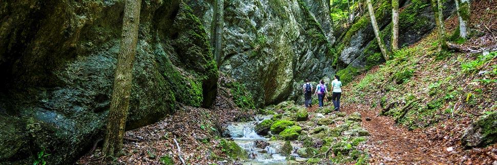 Wanderweg durch die Steinwandklamm in Niederösterreich