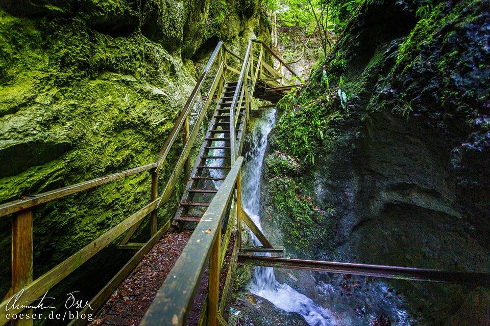 Wanderweg in der Steinwandklamm in Niederösterreich