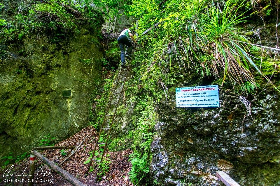 Leiter am Rudolf-Decker-Steig in der Steinwandklamm in Niederösterreich