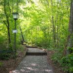 Die letzte Etappe zur Altenburg verläuft durch ein Waldstück