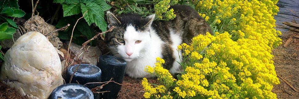 Katze in einem Garten in der Gärtnerstadt in Bamberg