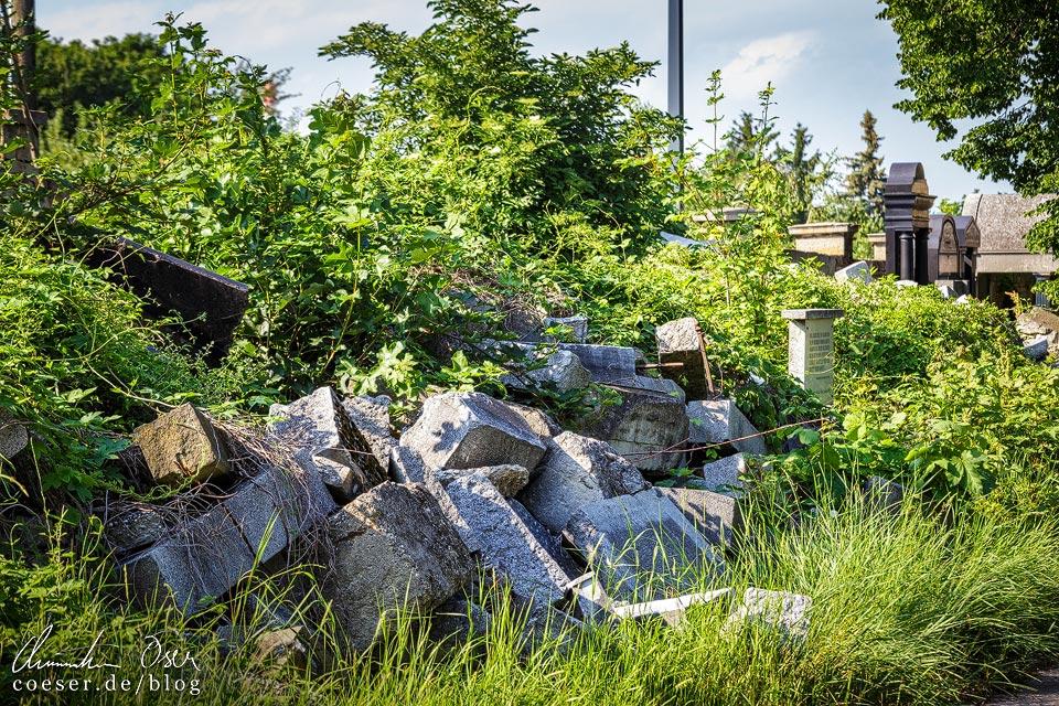 Aufgeschüttete jüdische Grabsteinreste als Mahnmal auf dem Wiener Zentralfriedhof