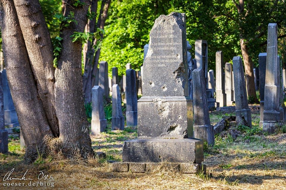 Einschusslöcher auf einem jüdischen Grabstein auf dem Wiener Zentralfriedhof