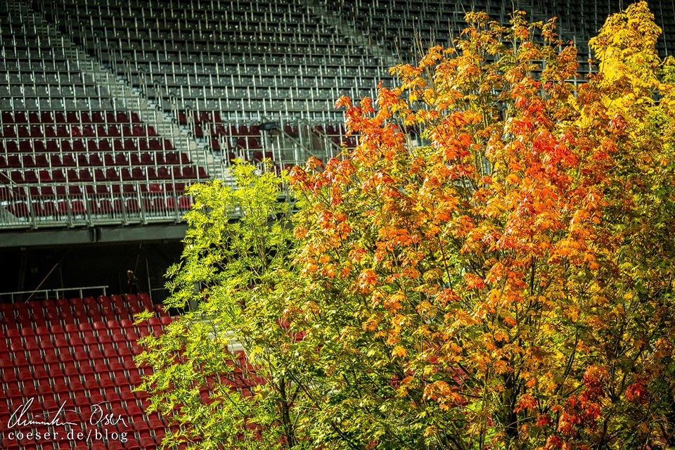 Herbstfarben in der Kunstinstallation FOR FOREST im Wörtherseestadion in Klagenfurt