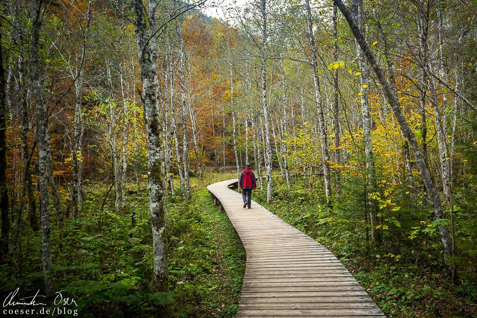 Weg durch den Auenwald in der Erlebniswelt Mendlingtal