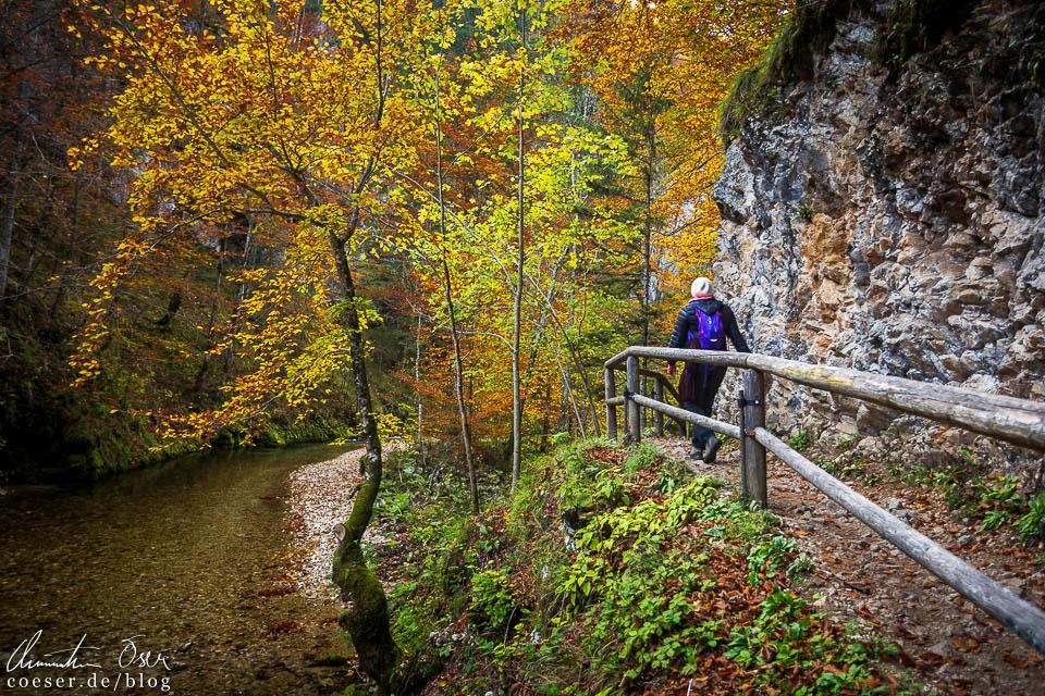 Wanderweg in der Erlebniswelt Mendlingtal