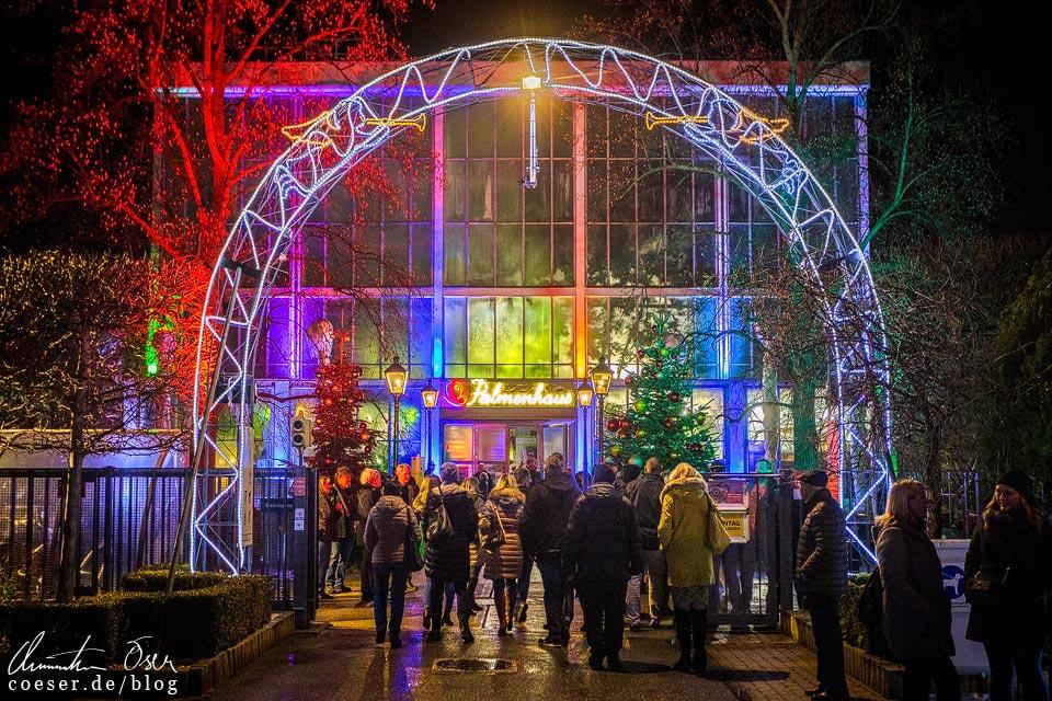 Palmenhaus am Weihnachtsmarkt in den Blumengärten Hirschstetten in Wien