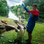 Fütterung der Pelikane im St James's Park in London