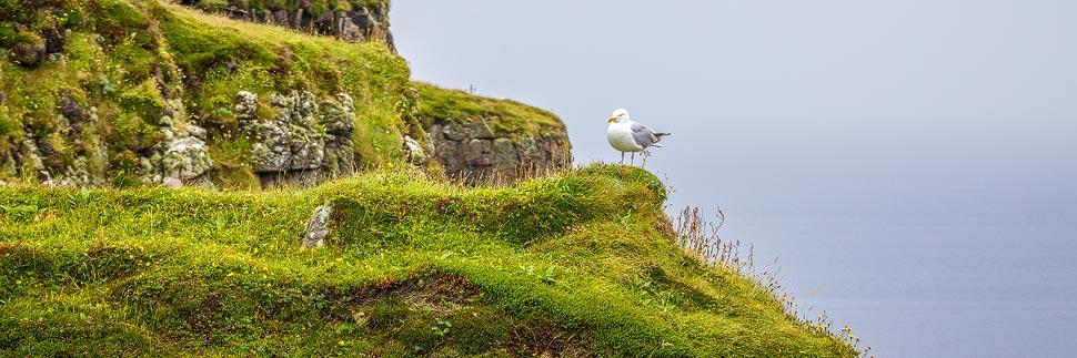 Ein Vogel auf der Insel Handa Island in Schottland