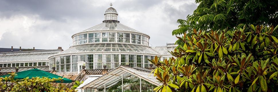 Das Palmenhaus im Botanischen Garten in Kopenhagen