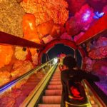 Zugang zur Ausstellung Planet Earth im Natural History Museum in London