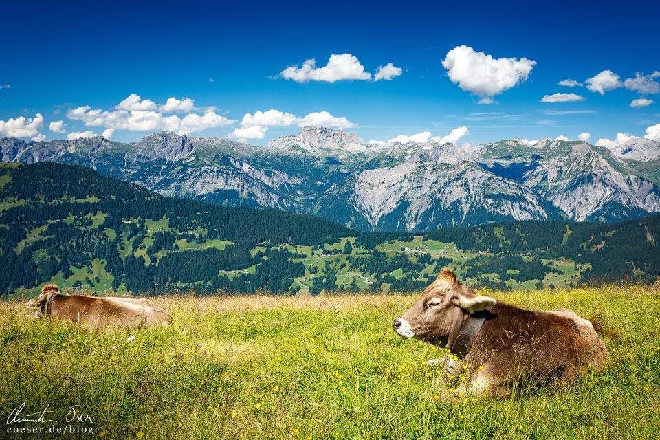 Kühe und Bergpanorama auf der 3-Seen-Wanderung auf dem Hochjoch