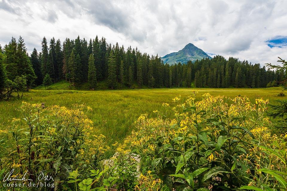 Hochmoor Wildried auf dem Kristberg in Silbertal