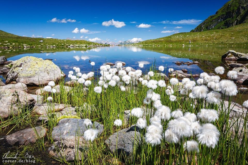 Wollgras am Ufer des Herzsees auf der 3-Seen-Wanderung auf dem Hochjoch