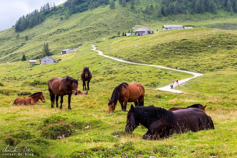 Rundwanderweg R2 und Pferde auf der Postalm