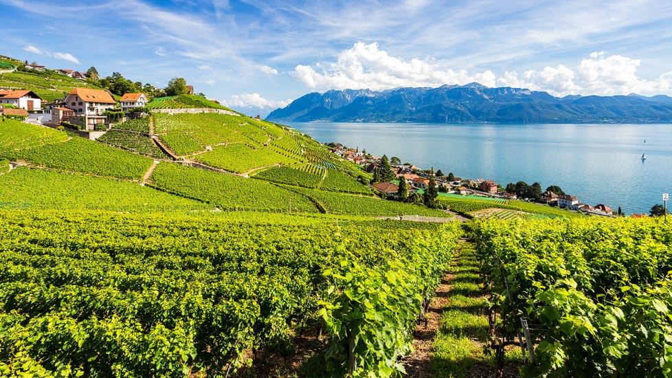 Panorama der UNESCO-Weinterrassen in Lavaux