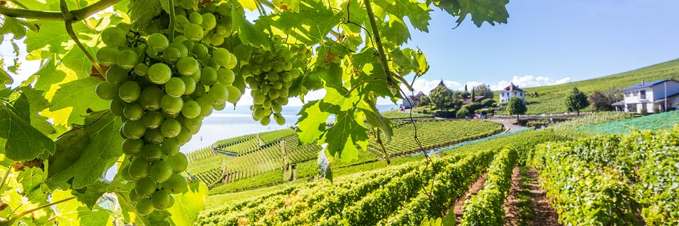 UNESCO-Weinterrassen in Lavaux