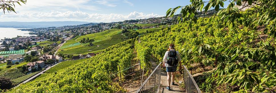 Weinwandern auf den UNESCO-Weinterrassen in Lavaux