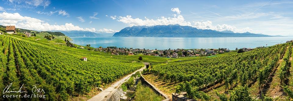 Die UNESCO-Weinterrassen von Lavaux