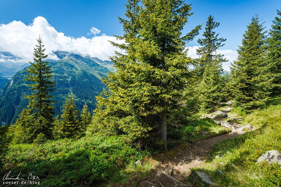 Wanderweg Wormser Höhenweg vom Wiegensee zum Kopssee