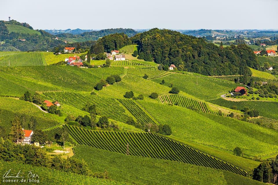 Landschaft mit Weinbergen in der Südsteiermark