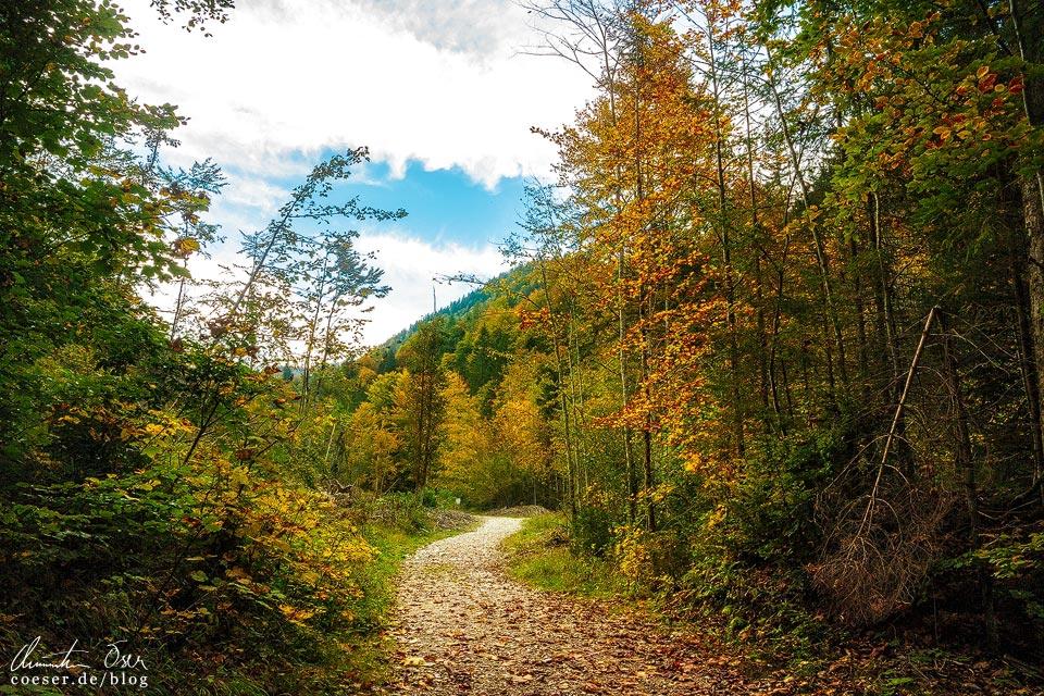 Herbstwaldweg nach der Wörschachklamm