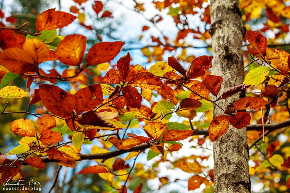 Bunte Herbstblätter in der Wörschachklamm
