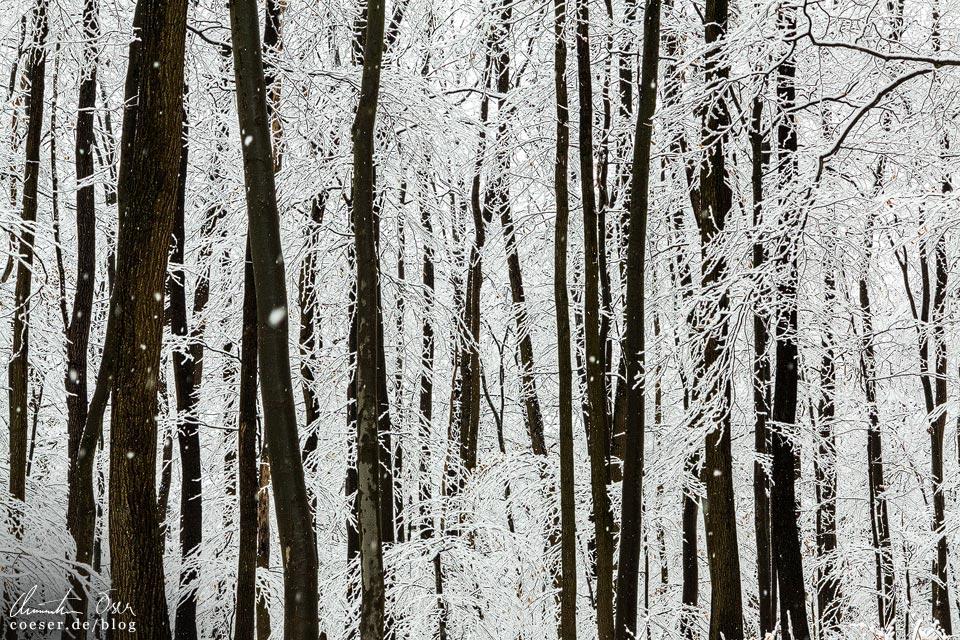 Stadtwanderweg 2 in Wien: Verschneite Baumlandschaft im Winter