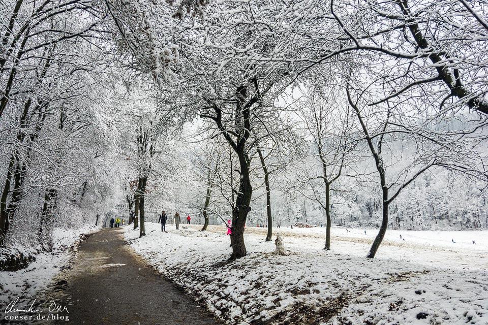 Stadtwanderweg 2 in Wien: Rohrerwiese im Winter