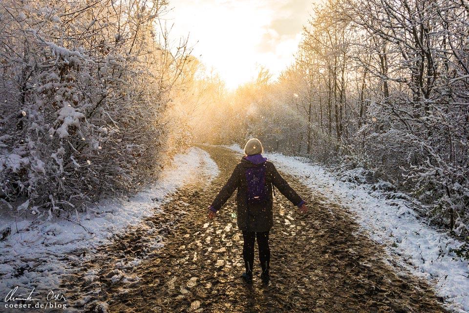 Stadtwanderweg 2 in Wien: Sonne und Schnee an der Kreuzeiche